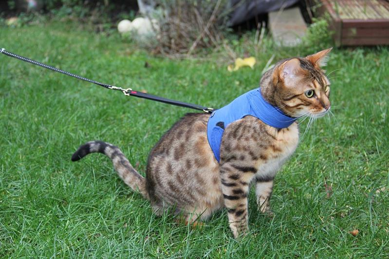 Best 5 Cat Harness