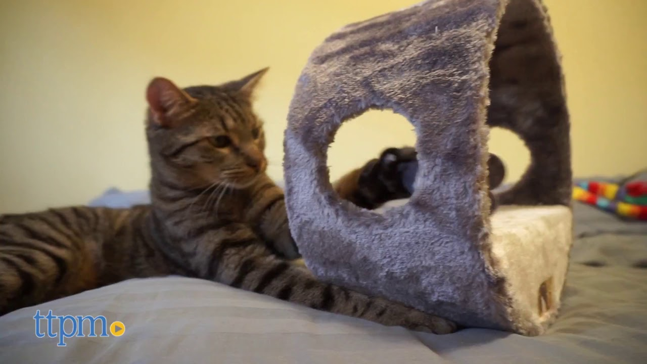 The Vortex-M cat toy Review