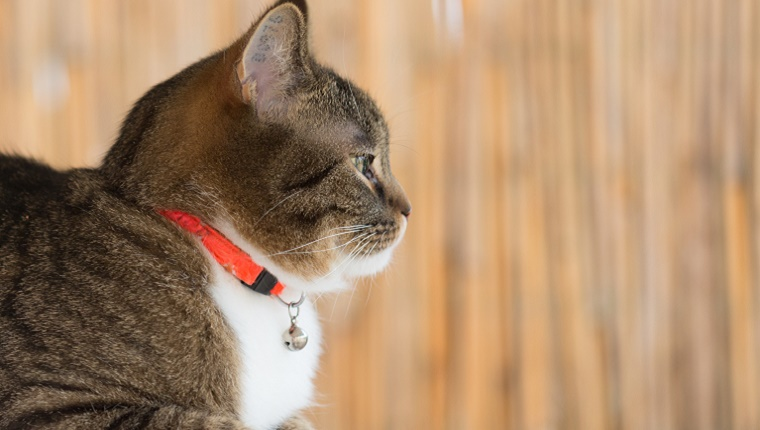 Best Cat Collars: A Cat Owner's Can Go-To Guide