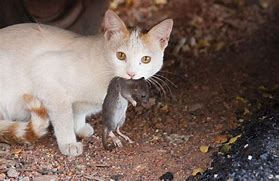Can I Feed My Cat Mice? Learn What to Know