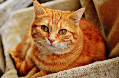 What Is a Mackerel Tabby Cat?