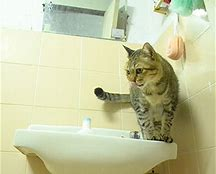 Why Do Cats Follow You Into The Toilet?