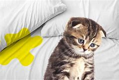 How Long Can a Cat Hold Their Urine? Basic Tips